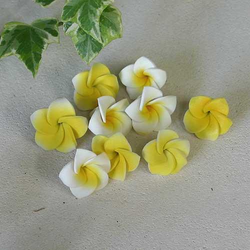 プルメリアの花びらSSB