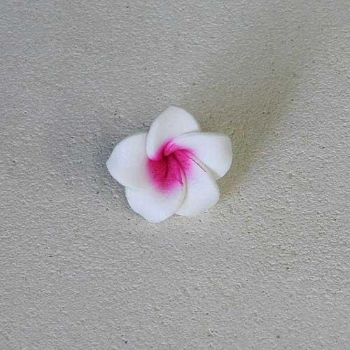 プルメリアの花びらSSA