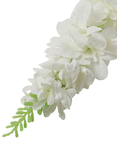 デンファレ(ホワイト)