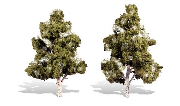 ウッドランド 完成樹木 白樺の木 広葉樹 ウォーターエッジ H約18-20cm 2本入