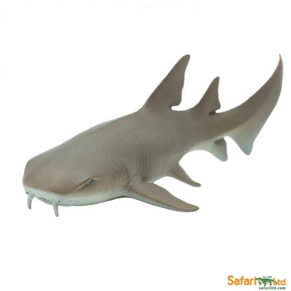 safari (サファリ) コモリザメ 200629