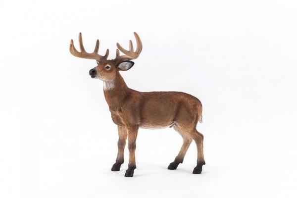 Mojo/ANIMAL PLANET 雄鹿 387038