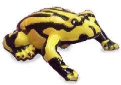 サイエンス&ネイチャー オーストラリア カエル(コロボリーカエル) 75361 (動物,フィギュア)