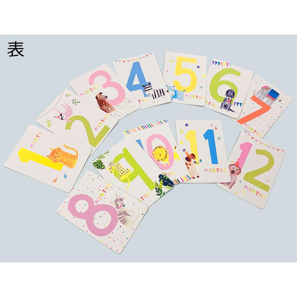 ベビーフォト用カードセット/アニマルズ