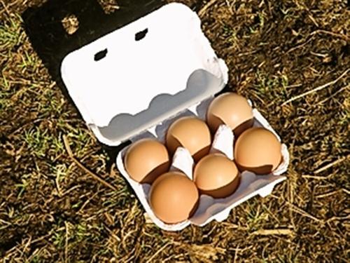 さいのね畑野菜BOX(小)&たまごセット