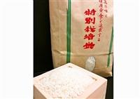 松下農園の特別栽培コシヒカリ(精米)10kg【送料無料】