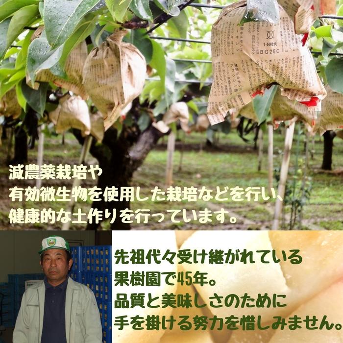 豊水梨 5kg (樋口農園)