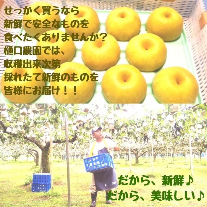 豊水梨 10kg (樋口農園)