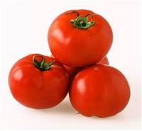 トマト アニモTY-10 1,000粒