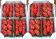 やよいひめイチゴ 【8パック】 (Strawberry farm 木村農園)