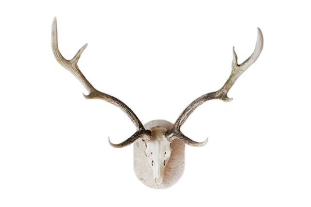 Yezo Deer Scull