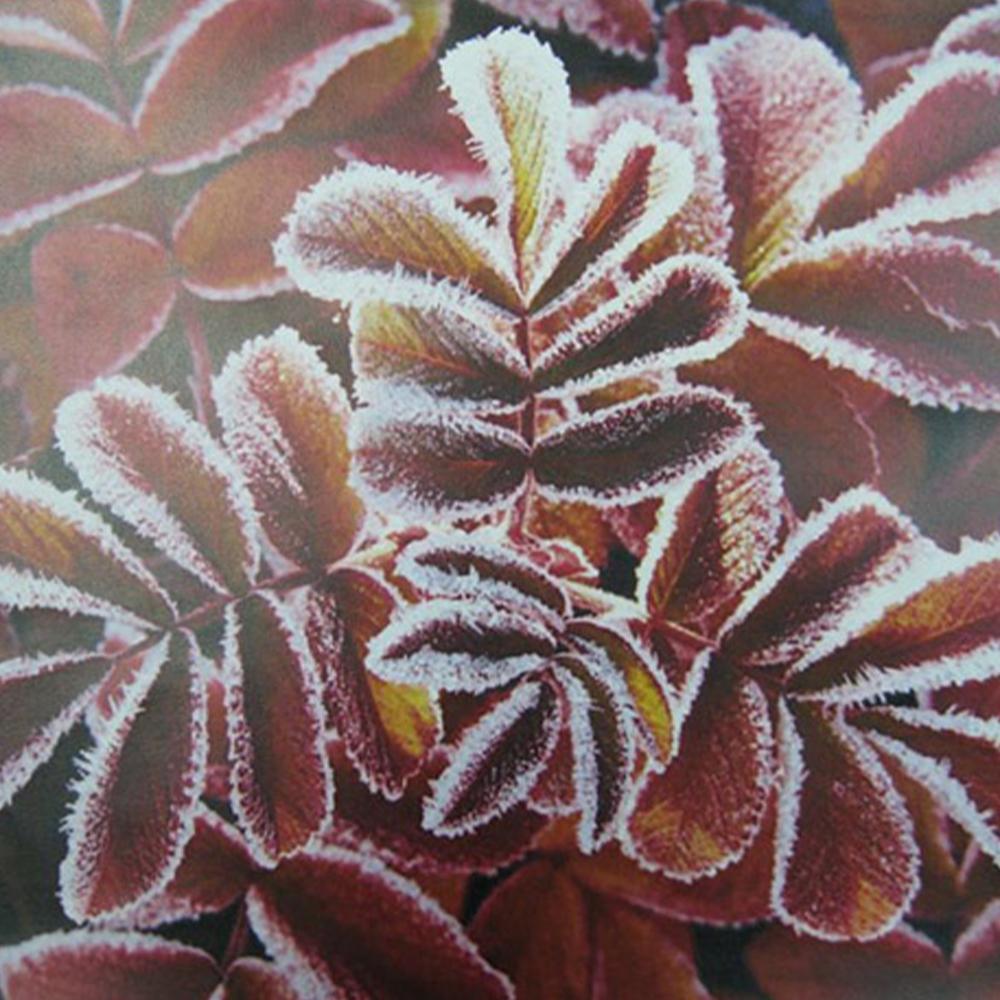 中古 カラー複合機 キャノン ADVANCE C2020F 美品 コピー FAX プリンター スキャナ 最大原稿A3 カセット4段 手差し