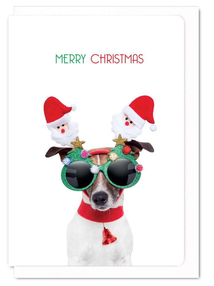 クリスマスカード Merry Christmas festive dog  ジャックラッセルテリア