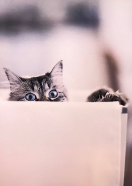 Cat in the box  グリーティングカード