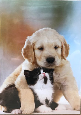 Best Friend   グリーティングカード