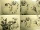 手彩色 銅版画 / 子犬  / エッジング 西洋アンティーク/ ヴィンテージ【中古】【送料無料】