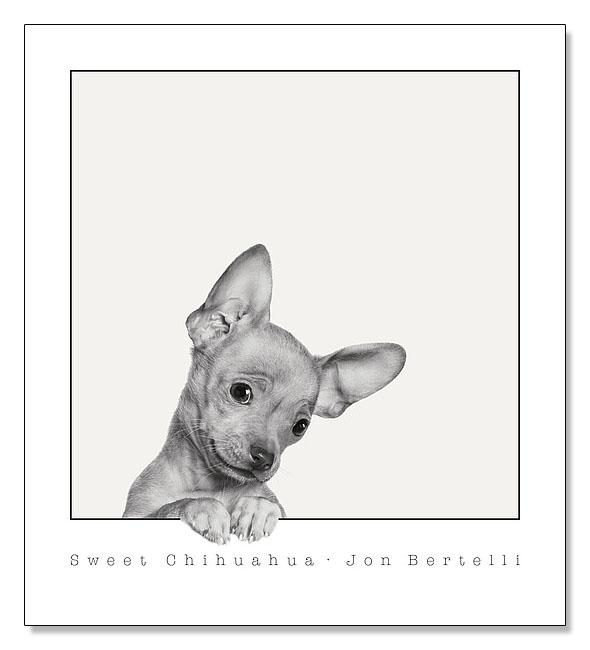 Sweet Chihuahua(ジョン ベルテッリ)