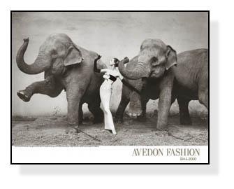 Dovima With Elephants(リチャード アベドン)【f】