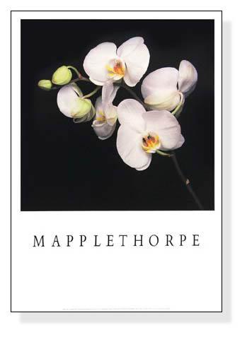 Orchid(ロバート メイプルソープ)【f】