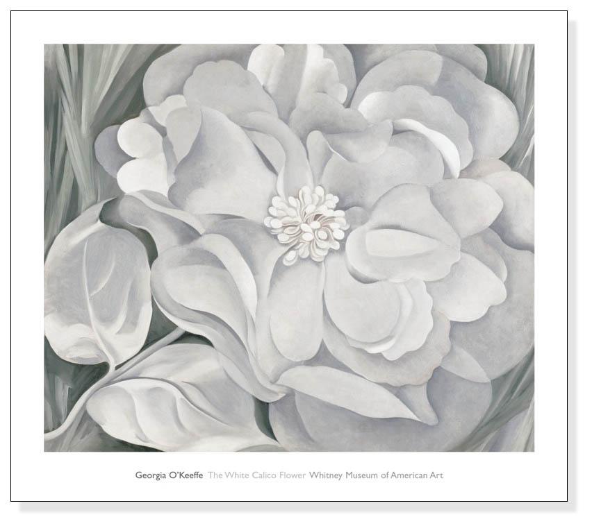 The White Calico Flower  1931(ジョージア オキーフ)【f】