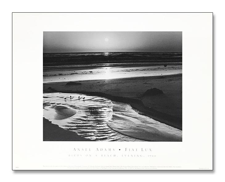 Birds on A Beach 1966(アンセル アダムス)
