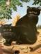 Black Cats(アンドレ・ドュラントン)