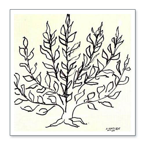 低木 1951年(アンリ マティス)