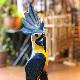 オウム置き物/スタンド型/南国鳥 【高さ60cm】