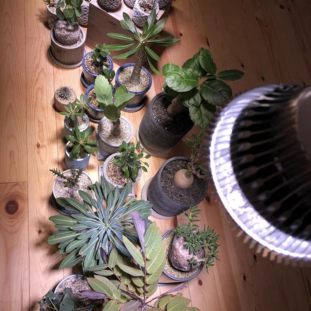 植物育成LED SUN-18W 白色電球 口径E26(PlantLight18W)観葉植物 植物栽培ライト (電球のみ)