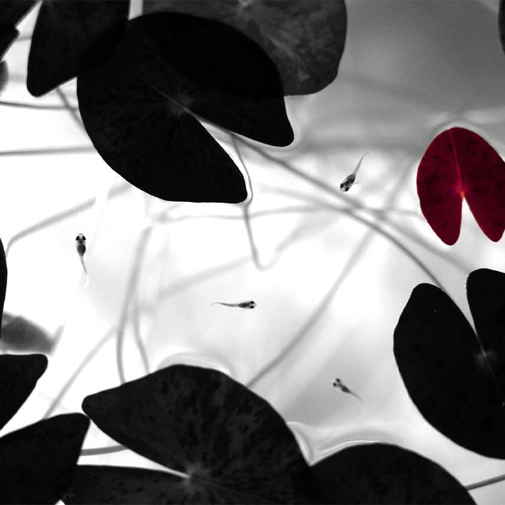 【予約販売受付中:5月末~6月末入荷予定】TSUKUYOMI LED 20W 植物育成LED 太陽光LED アクアリウムLED テラリウム 室内太陽光LED ホワイトボディ