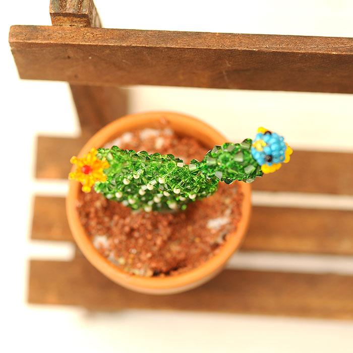 サボテンと幸せの青い鳥  【作家:ちばのぶよ】