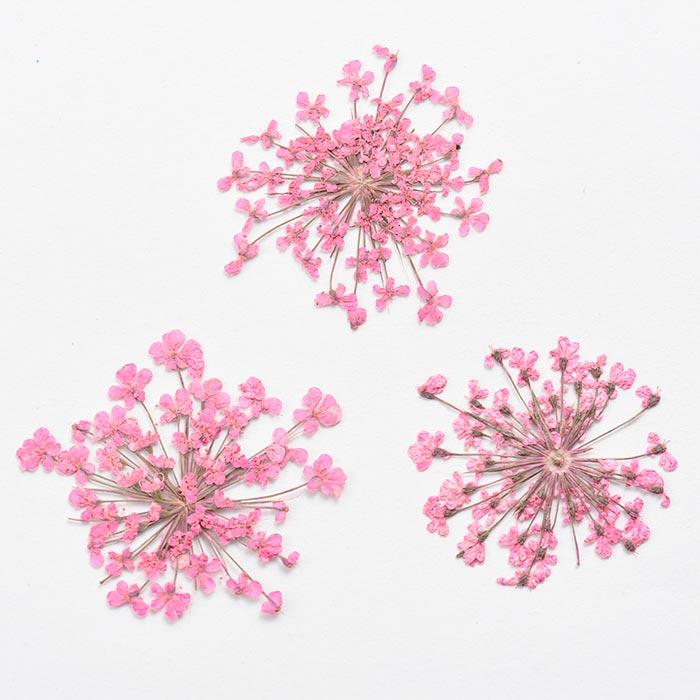 ドライフラワー(押し花) レースフラワー ピンク