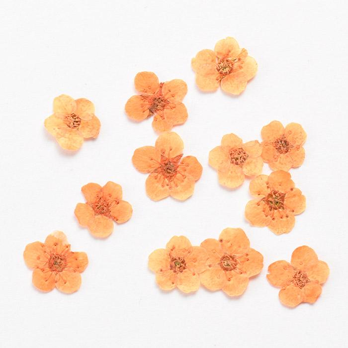ドライフラワー(押し花) こでまり オレンジ
