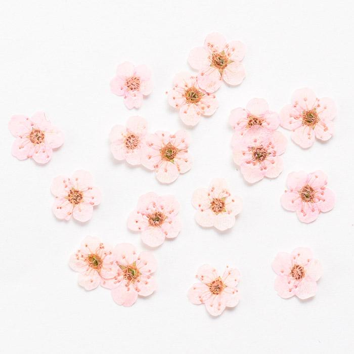 ドライフラワー(押し花) こでまり ライトピンク