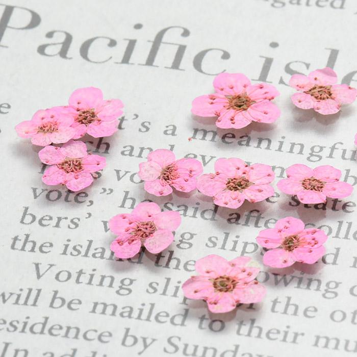 ドライフラワー(押し花) こでまり ピンク