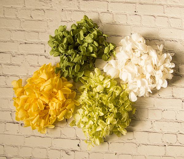 【ドライフラワー】 カラーあじさい  グリーン/ライトグリーン/イエロー/ホワイト