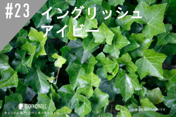 ◆【香料】#23 イングリッシュアイビー/English Ivy