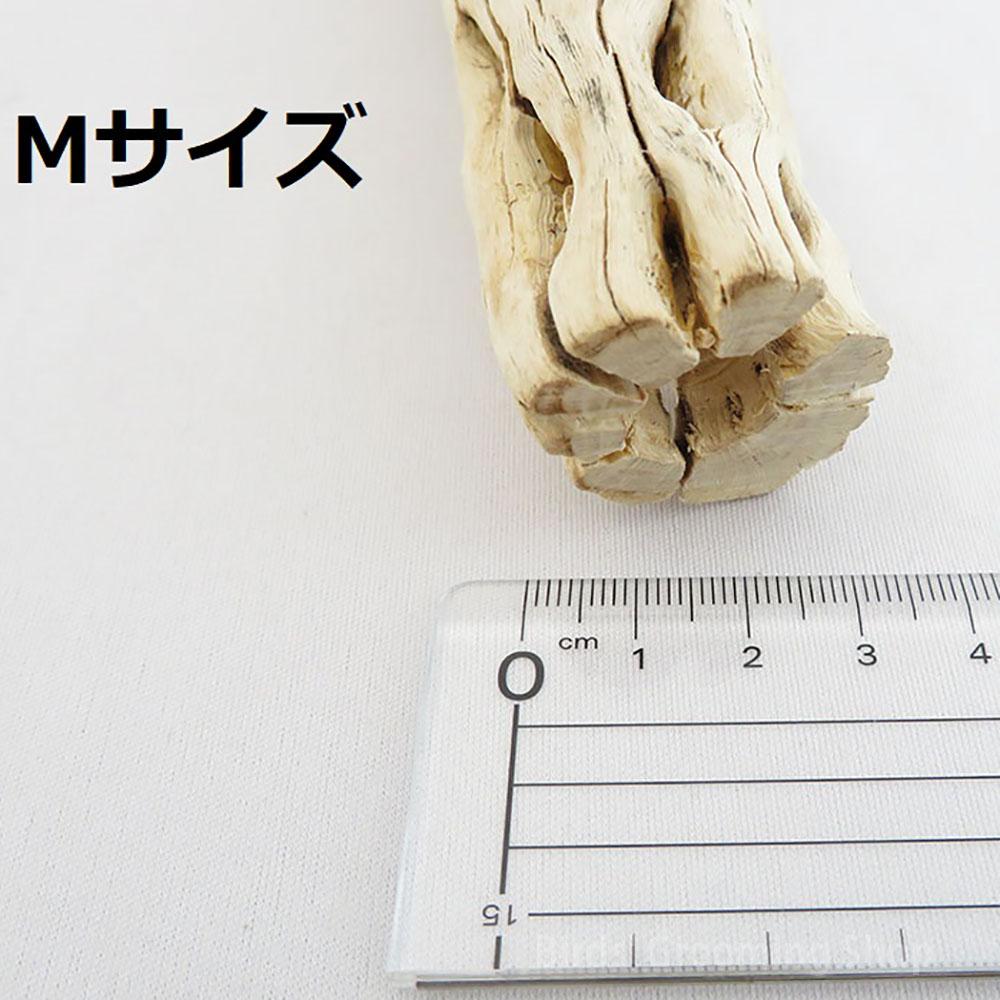 サボテンの止まり木[CACTUS PERCH]