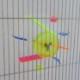 スピニングメイズ/ラージサイズ[The Maze Large]No:BP42L