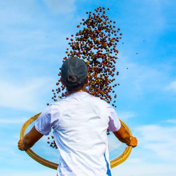 ブラジル ダテーラ農園 Blossom 中煎り コーヒー豆 100g