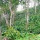 メキシコ オーロラ農園 SHG 浅煎り コーヒー豆 100g