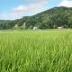 【10kg・栽培期間中農薬不使用米】おぼろづき・玄米
