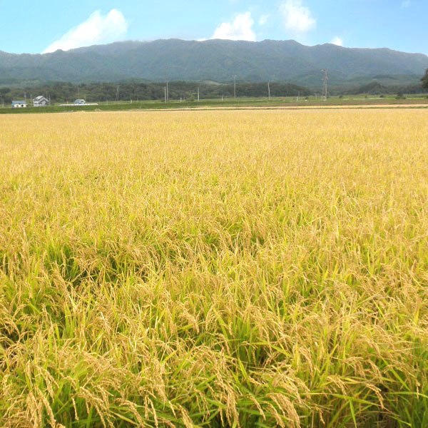 【10kg・栽培期間中農薬不使用米】きたくりん・白米