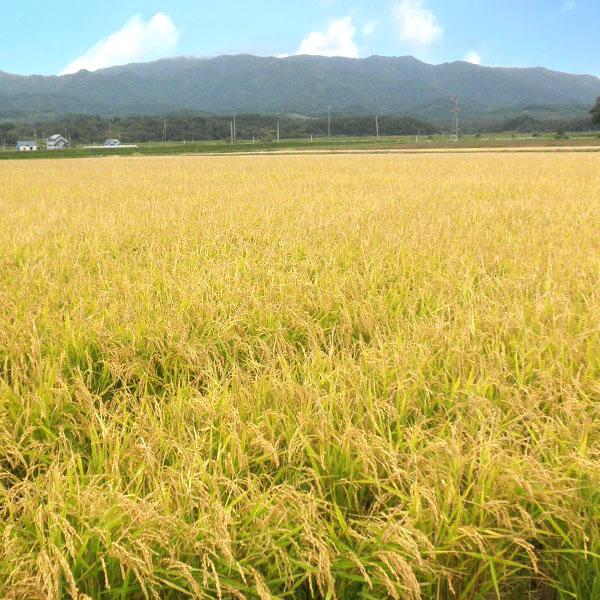 【10kg・栽培期間中農薬不使用米】きたくりん・玄米
