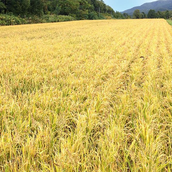 【10kg・栽培期間中農薬不使用米】ゆめぴりか・白米