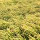【WEB限定】【北海道米食べ比べセット】特別栽培米・玄米300g 5種セット