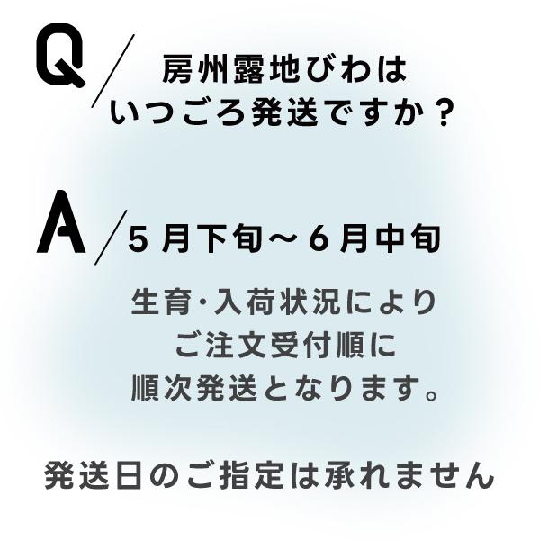 房州びわ(露地栽培)[Lサイズ]<br>1箱15粒 化粧箱入り