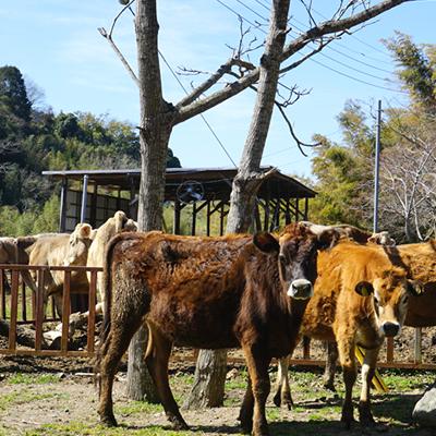 【近藤牧場】<br>近藤牧場のクレマカタラーナ<br>330gx2個セット