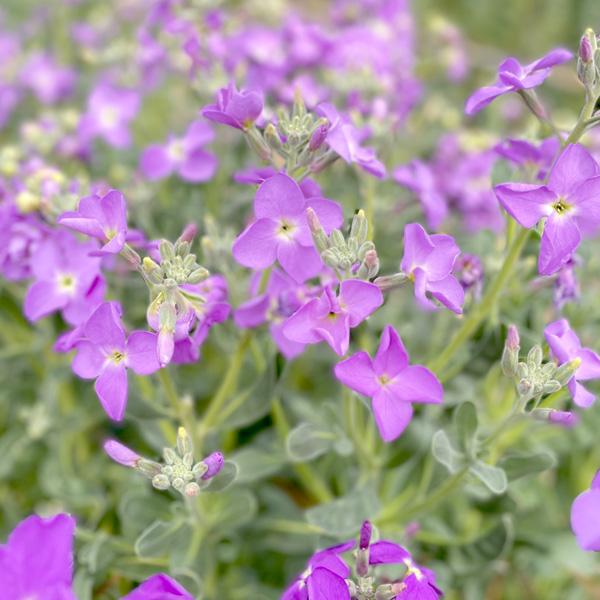 【新鮮豪華】南房総フラワーギフト*3000