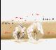 赤ちゃん誕生記念ベビークリスタル・ディアナゴールド・タイプA・ホワイトゴールド仕様・誕生石付き
